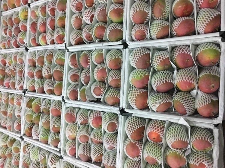 Tín hiệu tức cực cho Nông sản từ thị trường xuất khẩu