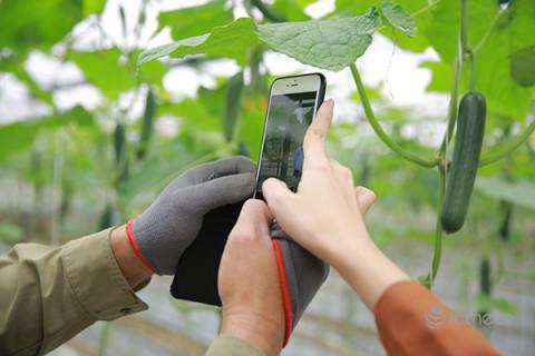 """Viettel Post """"giải cứu"""" nông sản thông qua sàn thương mại điện tử"""