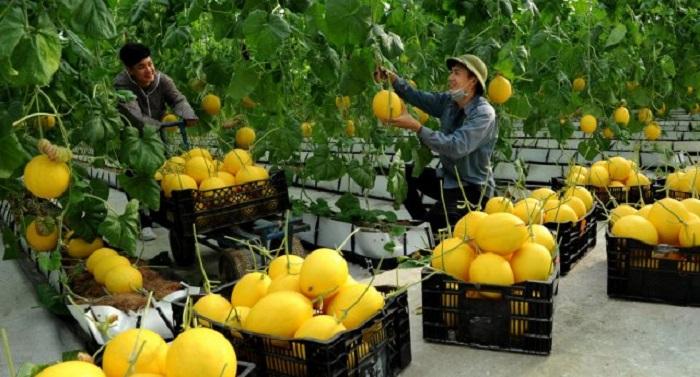 Thanh hóa là địa phương giàu tiềm năng và thế mạnh về nông sản. Ảnh: Internet