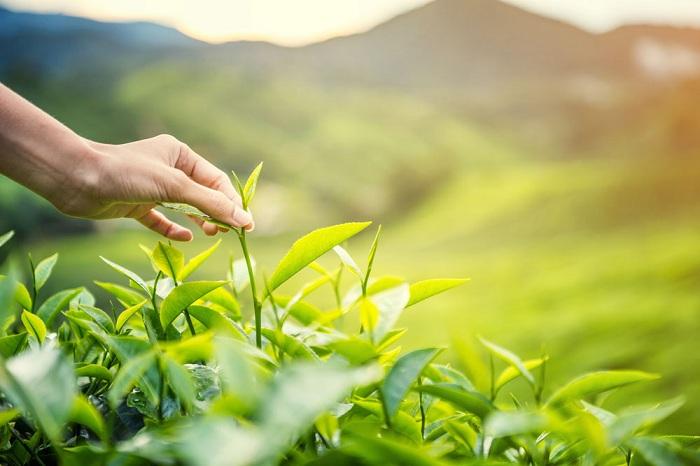 Thành phố Thái Nguyên: Hỗ trợ sản phẩm nông nghiệp cho doanh nghiệp và người nông dân
