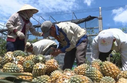 Điện Biên: Nâng cao thương hiệu sản phẩm Nông nghiệp