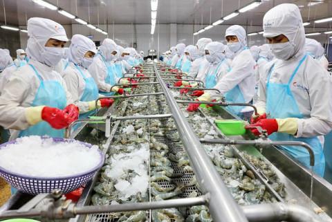 """Các doanh nghiệp xuất khẩu tôm """"dốc sức"""" hướng đến mục tiêu 4,4 tỷ USD năm 2021"""