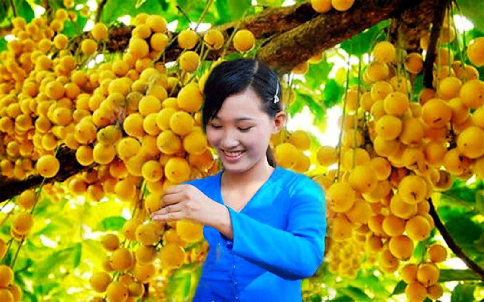 Dâu Hạ Châu tại KDL huyện Phong Điền, Cần Thơ là địa điểm được nhiều du khách tìm đến tham quan và chụp ảnh lưu niệm