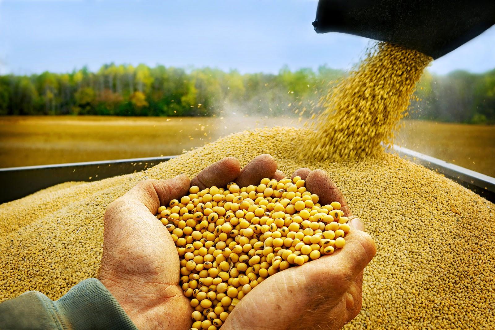 """Nhập khẩu đậu nành tăng mạnh, doanh nghiệp được """"ưu ái"""""""