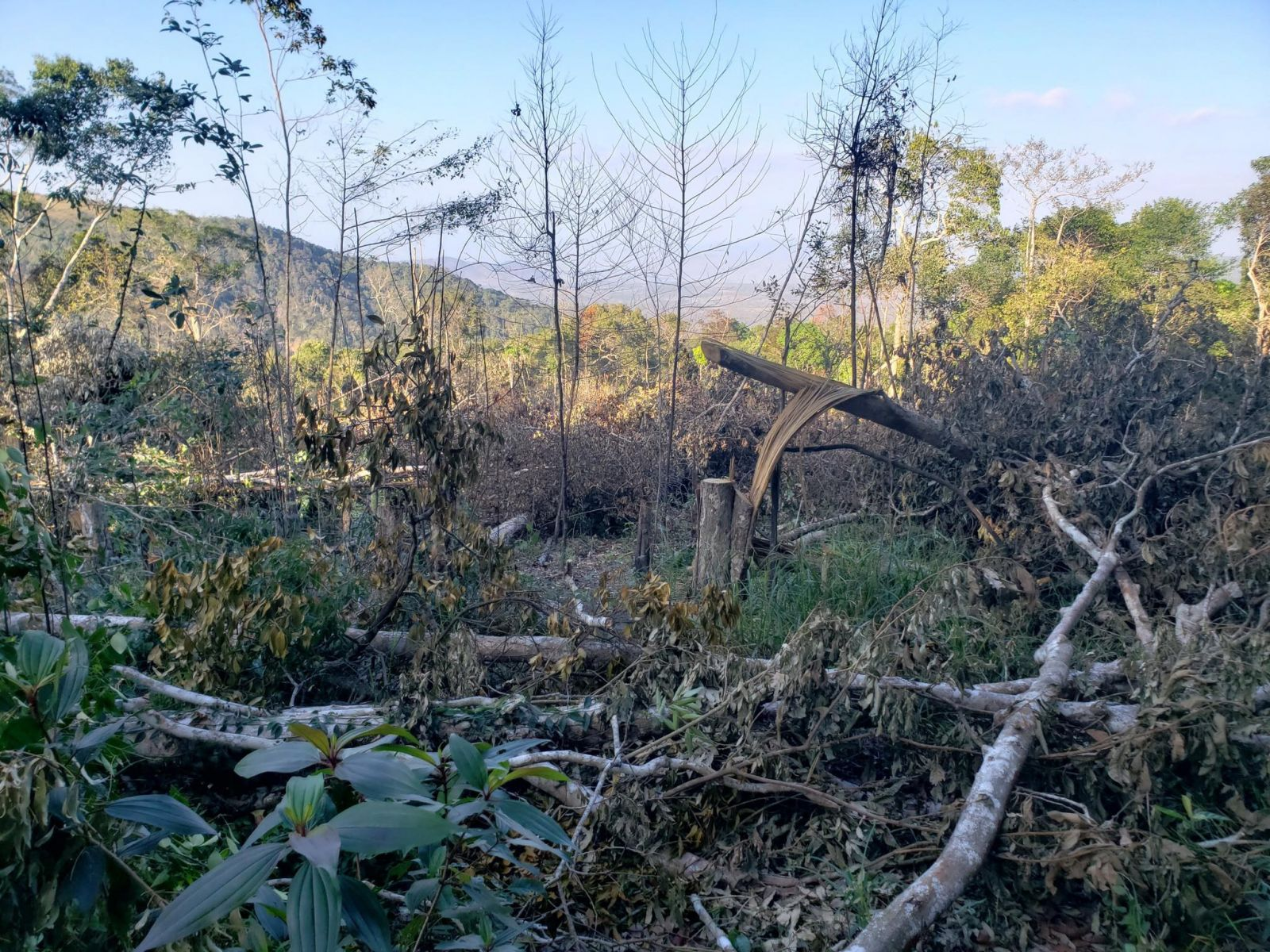22.000 ha rừng tại Đắk Lắk bị phá hoại không thương tiếc (ảnh: Hải Đỗ/ Dân trí)