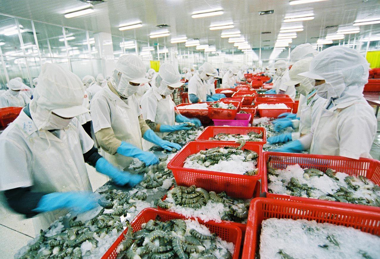 Doanh nghiệp thủy sản mạnh dạn đầu tư phát triển