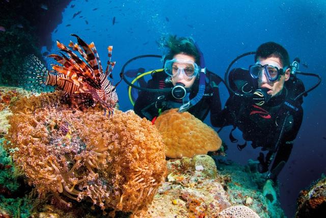 Ảnh: Những rạng san hô đầy màu sắc tại Phú Quốc. (nguồn: Internet)