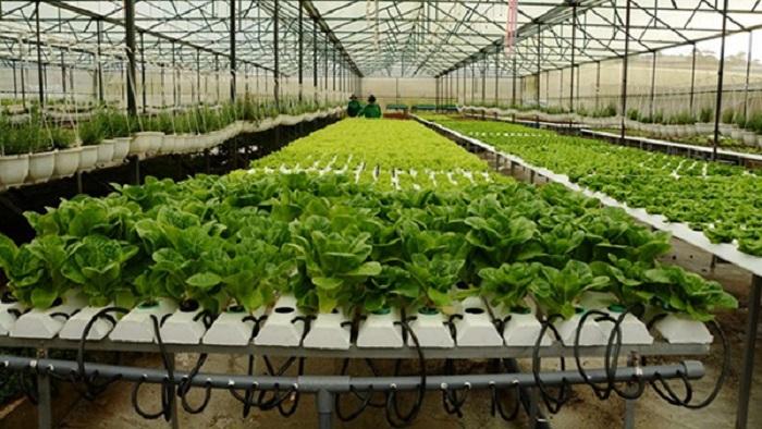 Hà Nội đẩy mạnh thu hút doanh nghiệp đầu tư vào sản xuất nông nghiệp ứng dụng công nghệ cao. Ảnh: Internet