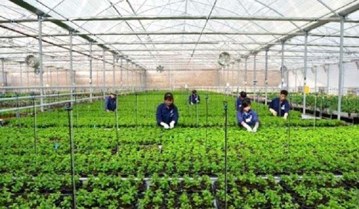 Thời gian qua, việc ứng dụng công nghệ cao trong sản xuất nông nghiệp đã được nhiều doanh nghiệp, hợp tác xã, tổ chức, cá nhân trên địa bàn thành phố Hà Nội đẩy mạnh ứng dụng. Ảnh: Internet