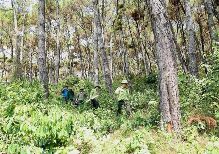 """Ngành Lâm nghiệp với mục tiêu bảo vệ an toàn diện tích rừng hiện có, giữ vững """"an ninh rừng tại gốc"""". Ảnh: Tư liệu"""