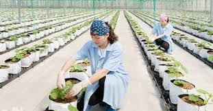 Thiếu lao động ngành nông nghiệp qua đào tạo