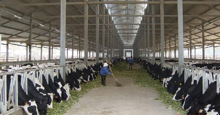 Mở rộng quy mô sản xuất, ứng dụng công nghệ vào chăn nuôi để đem lại hiệu quả cao. Ảnh: Internet