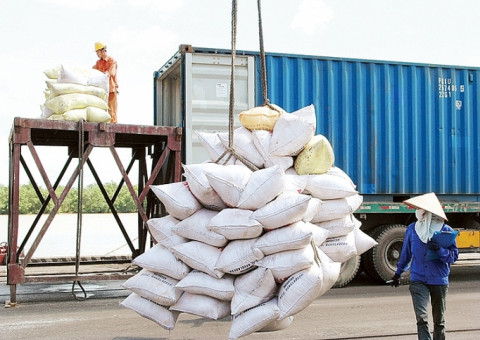 Doanh nghiệp Việt có cơ hội xuất khẩu hàng nghìn tấn gạo sang Hàn Quốc