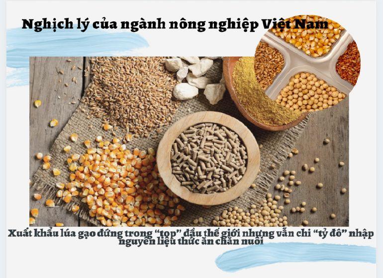 """Nghịch lý của ngành nông nghiệp Việt Nam: Xuất khẩu lúa gạo đứng trong """"top"""" đầu thế giới nhưng vẫn chi """"tỷ đô"""" nhập nguyên liệu thức ăn chăn nuôi"""