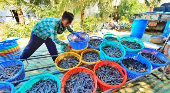 Huyện Hòn Đất (Kiên Giang) quyết tâm đạt chuẩn huyện nông thôn mới vào năm 2025
