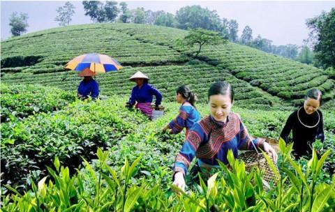 Phát triển trang trại, hợp tác xã kết hợp du lịch nông nghiệp, nông thôn