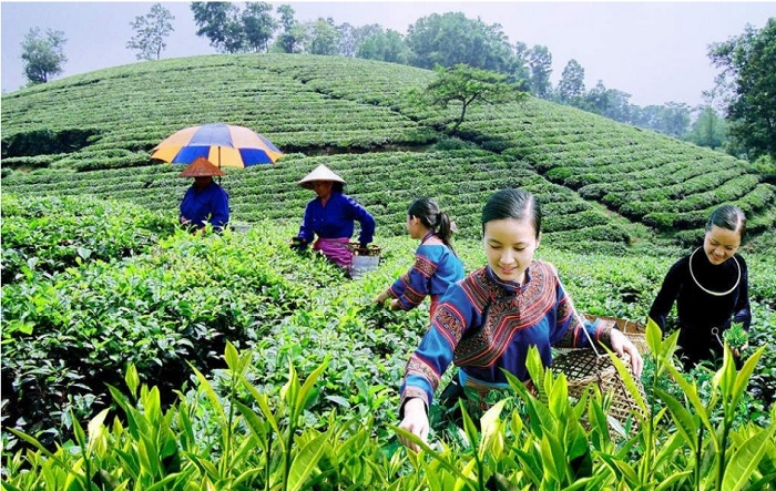 HTX nông nghiệp kết hợp hoạt động du lịch đang là hướng đi mới, có tiềm năng lớn. Ảnh: Internet