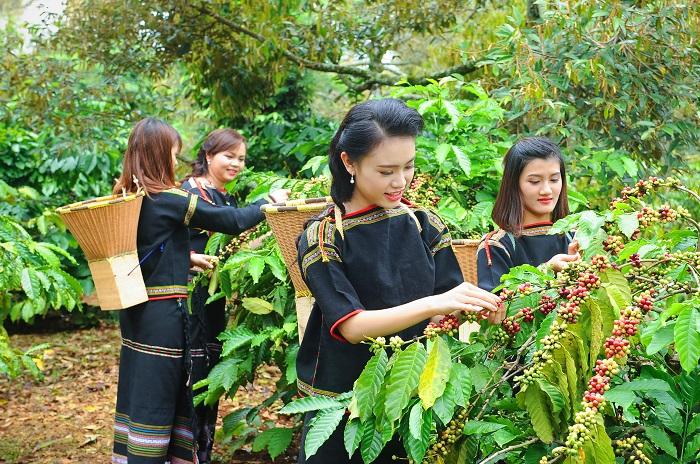 Cà phê Việt Nam là mặt hàng nông nghiệp nổi tiếng thế giới về chất lượng và cả số lượng xuất khẩu. Ảnh: Internet