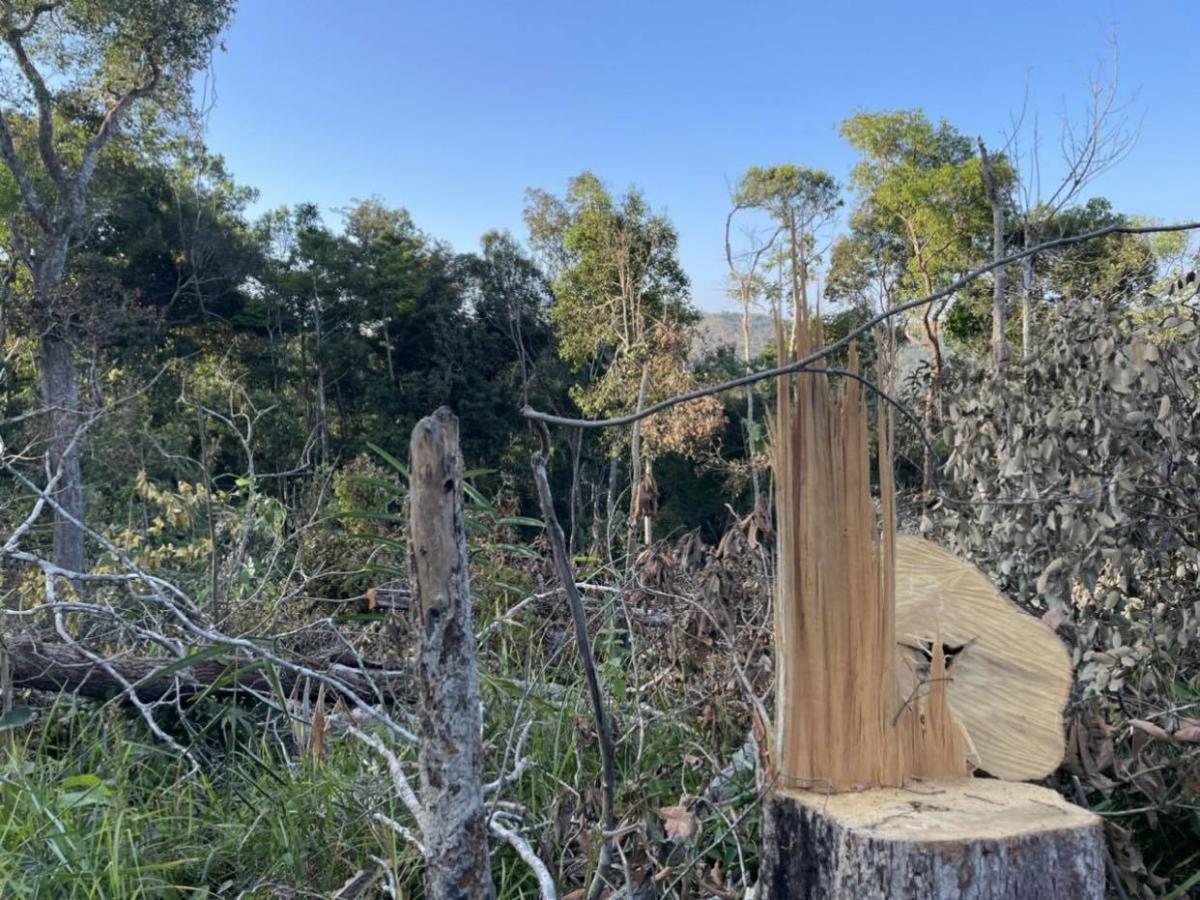 """Nhiều cánh rừng ngã xuống, nhưng """"vô chủ"""" vì hồ sơ ban đầu không thể ghi đúng tên đối tượng phá rừng."""