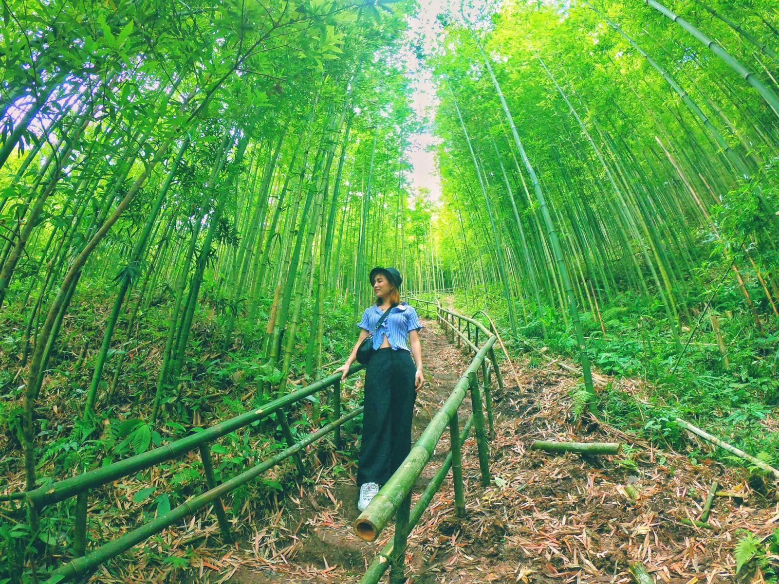 Du khách tham quan rừng trúc bản Nả Háng Tủa Chử xã Púng luông, huyện Mù Cang Chả