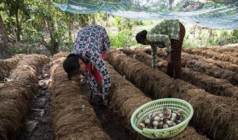 Kiên Giang: Hỗ trợ khởi nghiệp đổi mới sáng tạo trên địa bàn tỉnh năm 2021