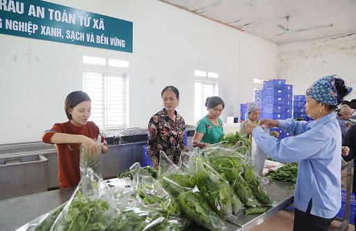 Một trong những khâu chuẩn bị trước khi bán ra thị trường của cơ sở sản xuất rau an toàn xã Tứ Xã