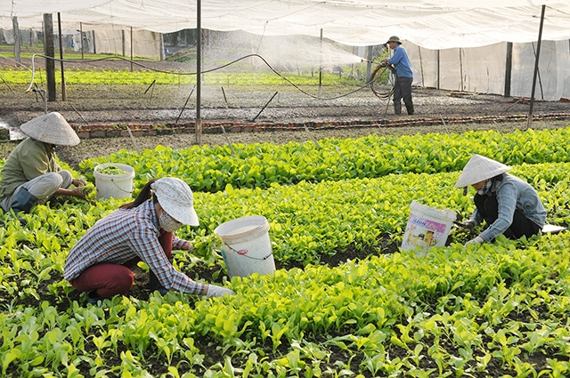 Hà Nội chốt chủ trương 3 phương án tăng trưởng ngành nông nghiệp