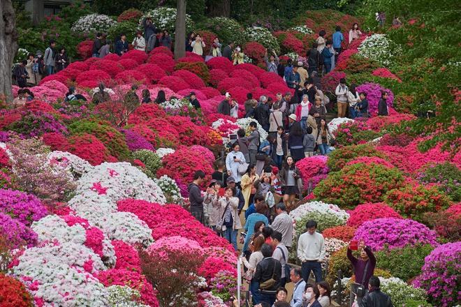 Lễ hội hoa chào hè 2021 quy mô lớn tại Sầm Sơn