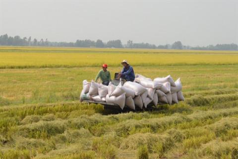 Huyện Tân Hiệp (Kiên Giang) hướng tới nông nghiệp sạch