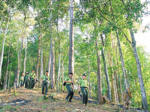 Phê duyệt Chiến lược phát triển lâm nghiệp Việt Nam
