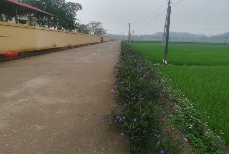 Một tuyến đường giao thông nông thôn trong chương trình xây dựng Nông thôn mới ở Tam Nông, Phú Thọ.