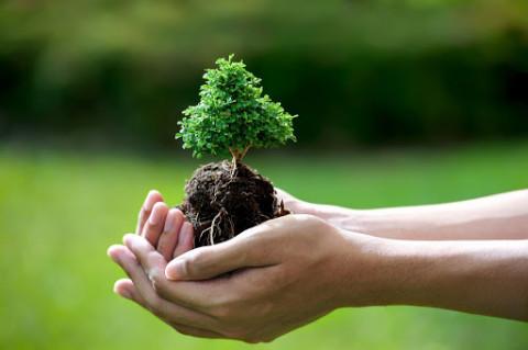 Phấn đấu trồng được một tỷ cây xanh đến năm 2025