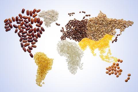 FAO: Tháng 3/2021, giá lương thực thế giới tiếp tục tăng