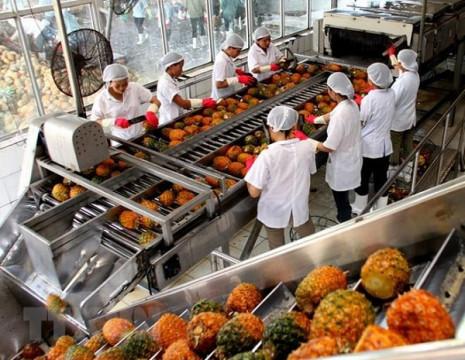Xuất khẩu rau quả tăng 6,1% trong quý 1-2021