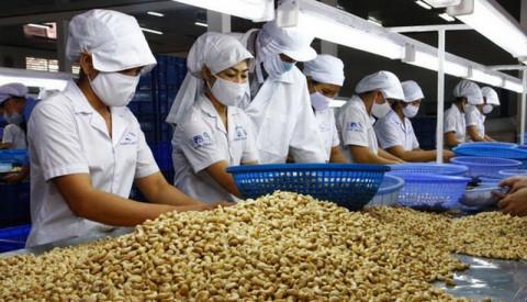 Quý I/2021, ngành điều Việt Nam ước đạt 108 nghìn tấn