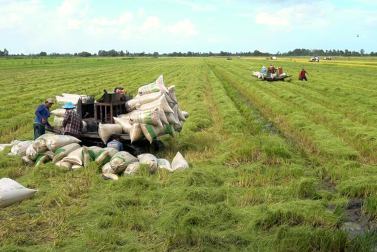 Kiên Giang: Tập trung sản xuất vụ lúa Hè Thu an toàn, hiệu quả