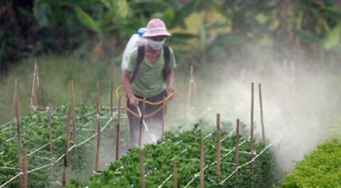 Diện tích đất canh tác nông nghiệp toàn cầu có nguy cơ ô nhiễm thuốc trừ sâu