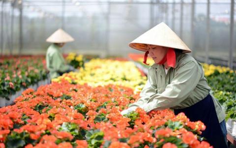Đà Lạt: Mục tiêu trở thành trung tâm sản xuất giống hoa lớn nhất cả nước