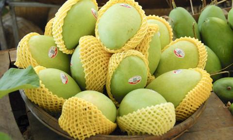 Trái Xoài Việt Nam rộng cửa tại thị trường Hàn Quốc