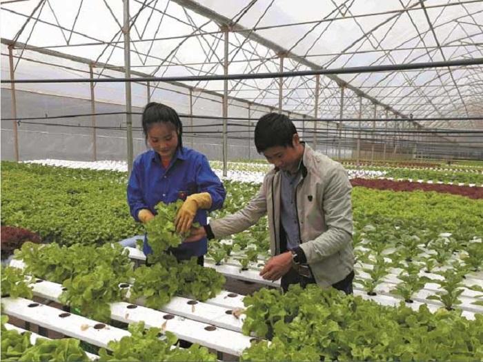 Việc ứng dụng hướng tới luôn đảm bảo nguồn cung cho chuỗi thực phẩm trong nước Ảnh tư liệu