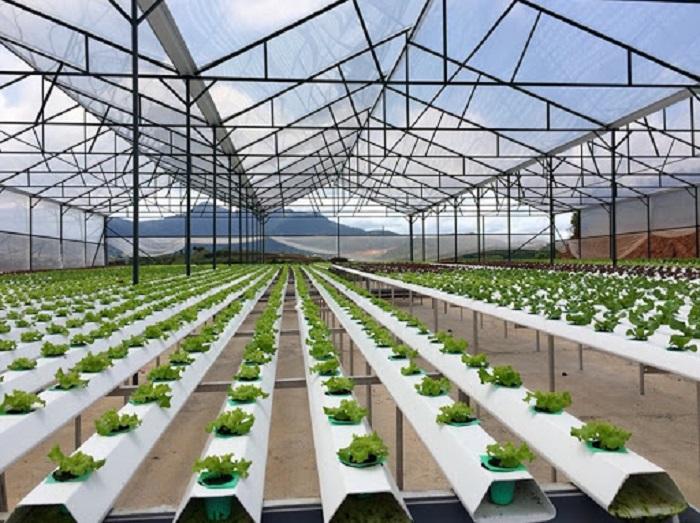 Ứng dụng công nghệ sinh học góp phần tăng năng suất và giảm thiểu chi phí thuốc bảo vệ thực vật Ảnh tư liệu