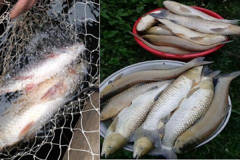 """Thanh Hóa: Nhiều cơ sở sản xuất lâm sản """"Bức tử"""" dòng sông Mã gây hiện tượng cá chết hàng loạt"""