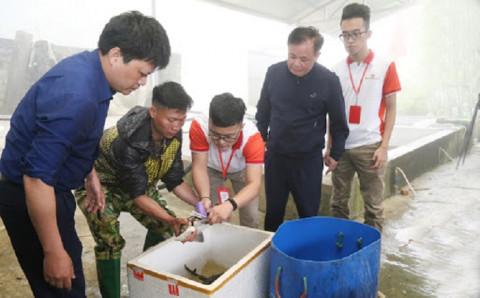 Cá nước lạnh Lào Cai gắn tem truy xuất người tiêu dùng yên tâm với nguồn gốc cá cùng quy trình chăm sóc