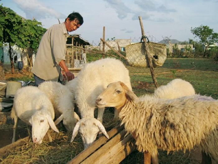 Mức biểu phí trong lĩnh vực chăn nuôi được chia làm nhiều mức tùy nội dung thẩm định.Ảnh: Internet