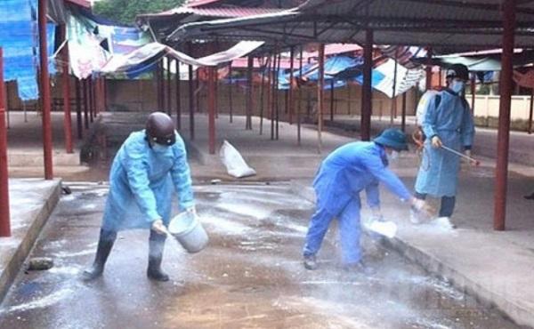 Chính quyền cấp xã tổ chức các đội tổng vệ sinh, phun thuốc sát trùng cho khu vực chăn nuôi hộ gia đình, chợ buôn bán động vật sống ở nông thôn, nơi công cộng..