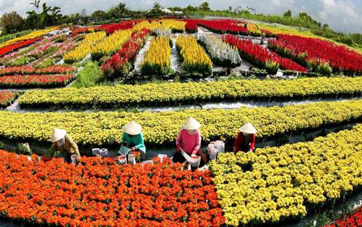 Làng hoa kiểng Sa Đéc sặc sỡ dưới bàn tay của các nghệ nhân