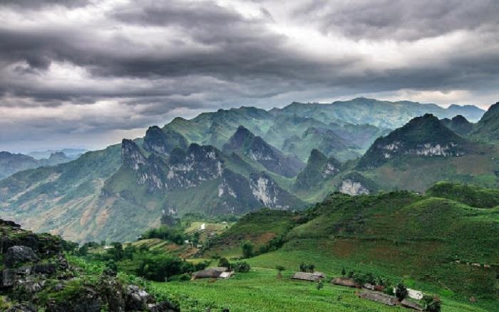 Tỉ lệ che phủ rừng của Việt Nam hiện đạt hơn 42%. Ảnh: Internet