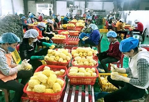 Hà Nội: Đẩy mạnh liên kết sản xuất và tiêu thụ nông sản