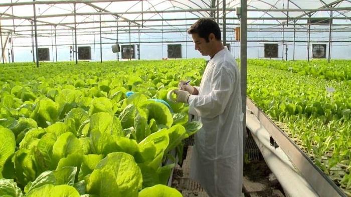 Doanh nghiệp nông nghiệp công nghệ cao đóng vai trò trung tâm trong ứng dụng khoa học công nghệ . Ảnh: internet