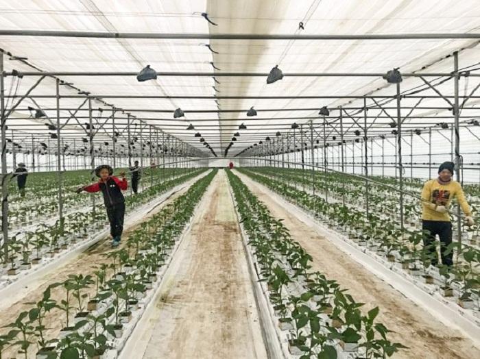 Nhiều doanh nghiệp đã đầu tư vào các khu sản xuất nông nghiệp công nghệ cao tập trung quy mô lớn với công nghệ hiện đại. Ảnh: Internet